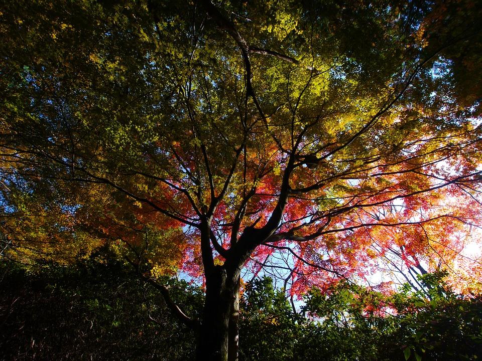 コトワザ好き、独立志向の方。必読!「寄らば大樹の陰」について新たな視点で考えてみた。