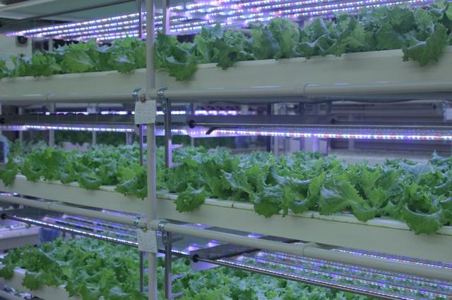 植物工場・AIやロボットが作った農産物より、人が作った農産物の方が良い!と思う理由